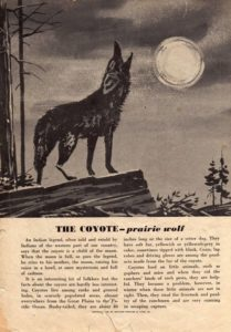 coyote-blog-image